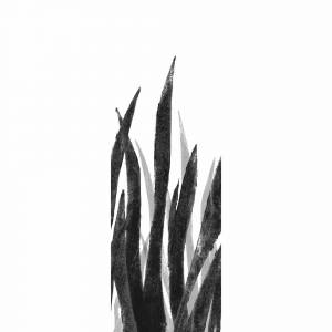 Papier peint Poseidonia