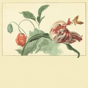 Panoramique Fleur Fânée Master Piece