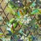 Papier Peint Canopy