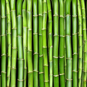 Panoramique Bamboo